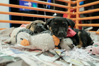 WATCH LIVE: Puppy Cam at MHS Telethon