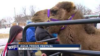 Aqua Freeze Festival