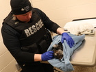 Dog found wrapped in plastic in Detroit