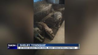 Almost 2 dozen dogs taken from Macomb Co. home
