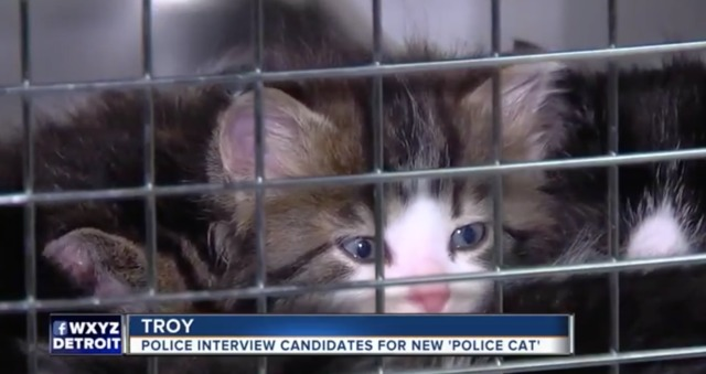 Troy police cat diagnosed with serious medical condition