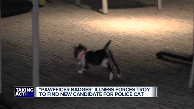Troy police cat falls ill; department to choose new mascot