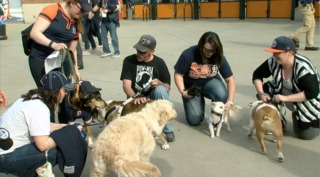 Photos: Tigers host Bark at the Park