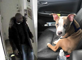 Man allegedly stole puppy during home invasion