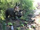 Dinosauria returns to Detroit Zoo
