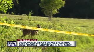 Raw sewage backup In Ann Arbor leads to fears