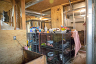 Humane society rescues 108 animals from home