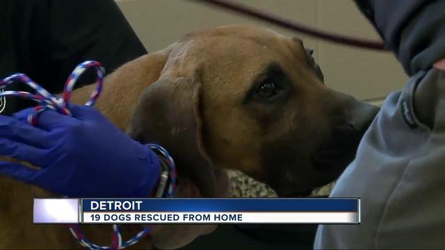 Dogs Rescue In Michigan