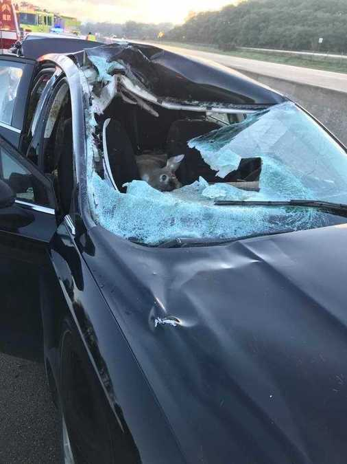 Deer smashes through car windshield
